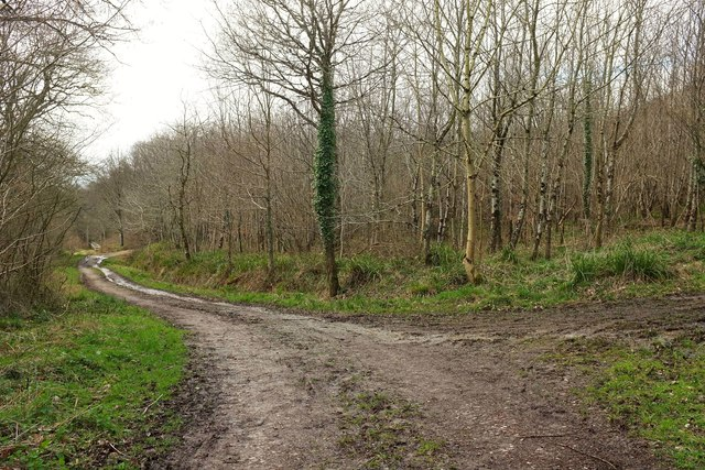Track junction, Hooke Park