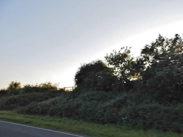 Hedgerow by the A140, Newton St Faith