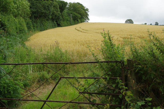 Farmland at Stapleton