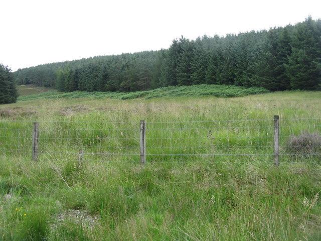Forestry in Glen Holm