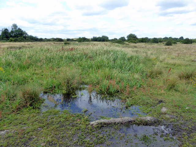 Damp area, Staines Moor