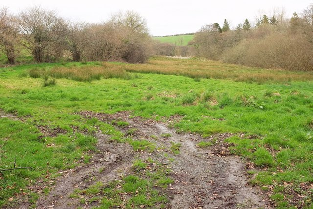 Rushy field by Pigs Moor Coppice
