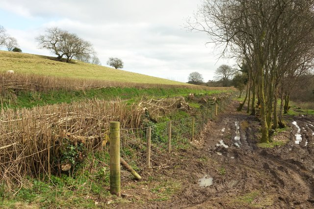 New-laid hedge, Toller Whelme