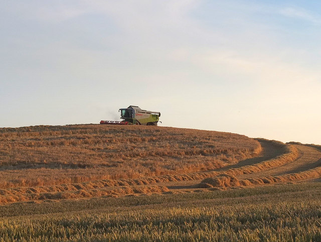 Wheat harvest West of Upholland Road