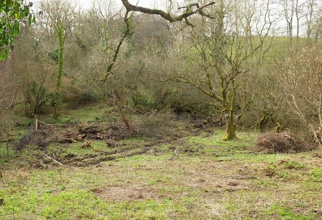 Field near Toller Whelme