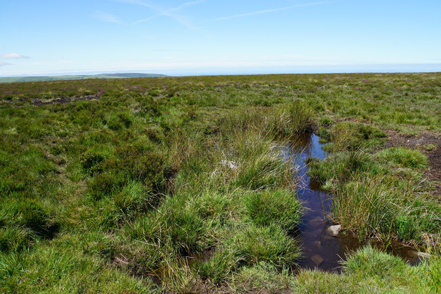 Moorland on Dunkery Hill