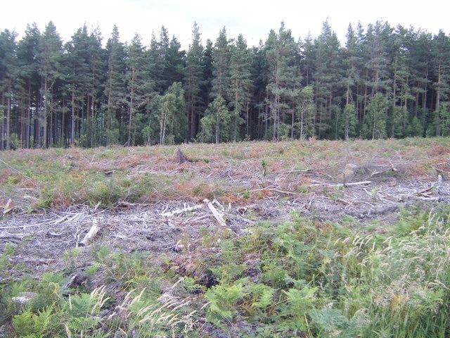 West Moor Plantation