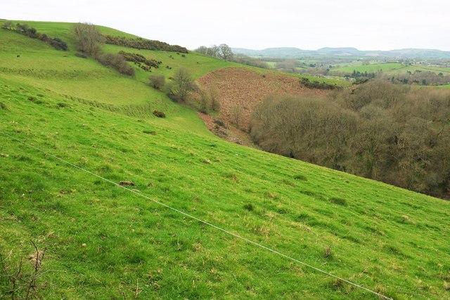 Hillside near Mapperton Farm