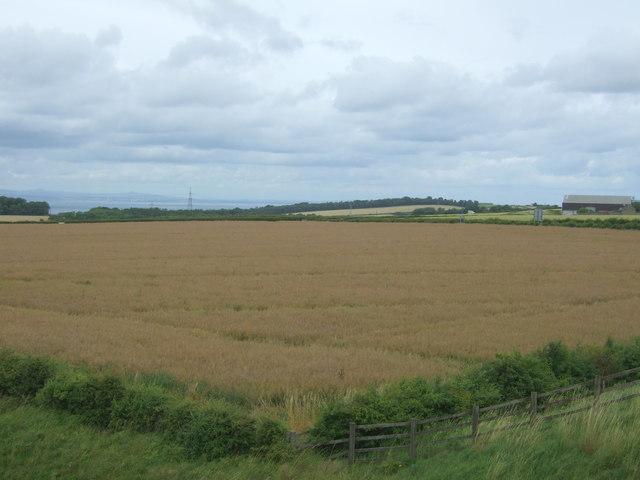 Crop field near the A68