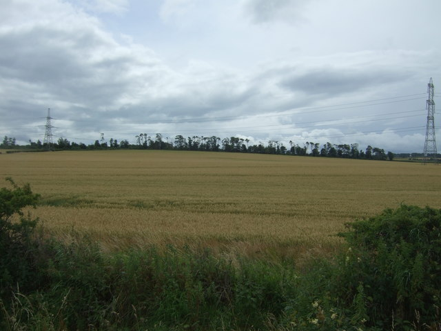 Cereal crop near Templehall