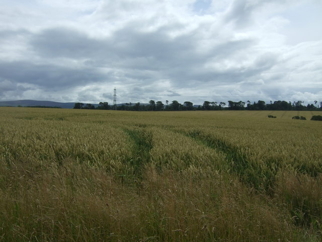 Cereal crop near Templehall