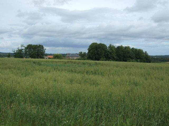 Crop field, Lempock Wells
