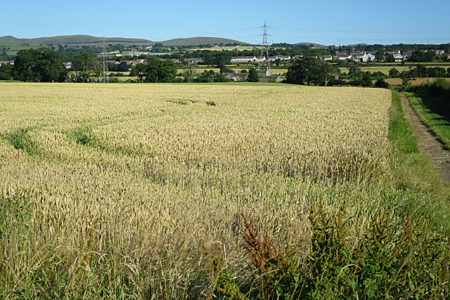 Field near Cocklaw
