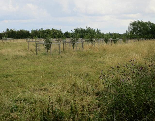 Orchard at Fen Drayton Lakes