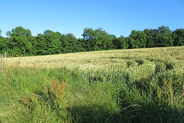 Field near Easter Newton