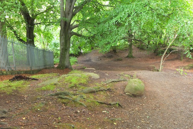 Woodland path, Corstorphine Hill