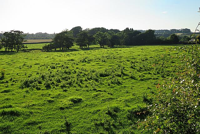 Fields near Burnwynd