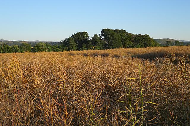 Field near Ratho Mains