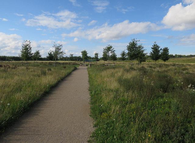 Track through Hobson's Park