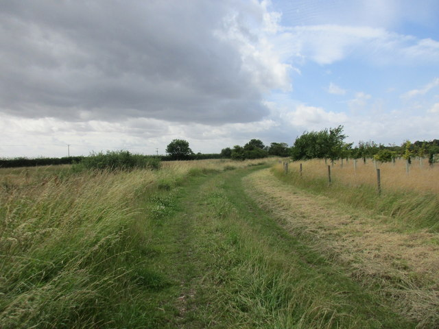 Track by a new area of woodland