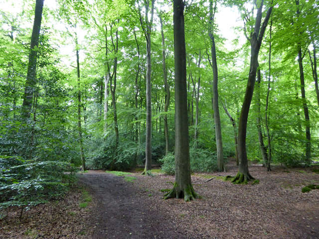 Path in Netherlands Wood