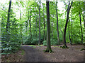 SU9492 : Path in Netherlands Wood by Robin Webster