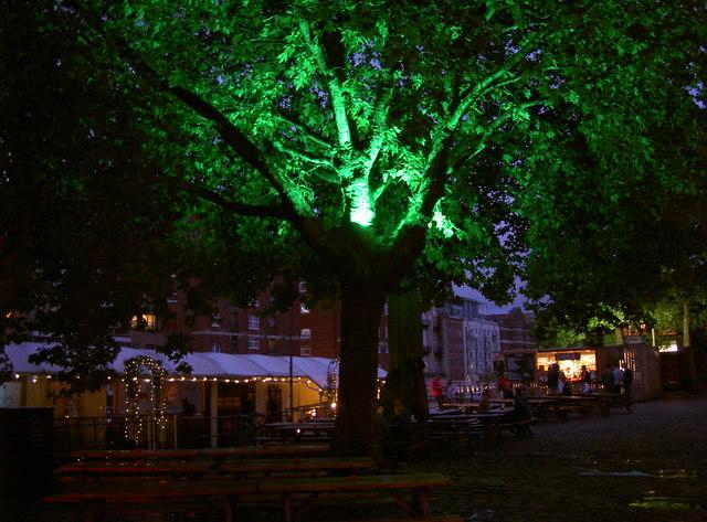 Green tree on Welsh Back