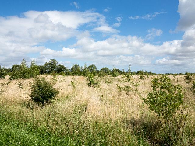 Woodland regeneration at Low Burnhall