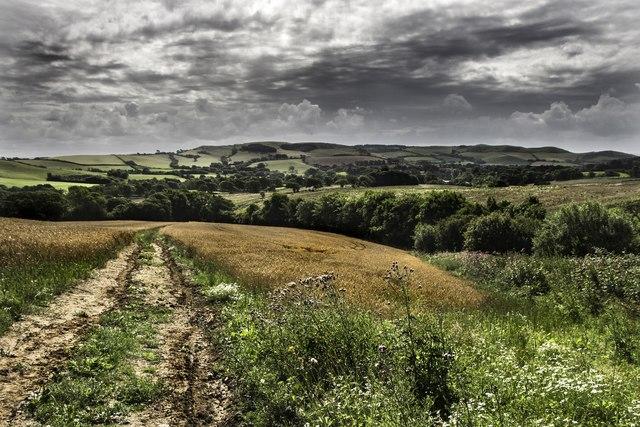 Butt Lane, Dorset