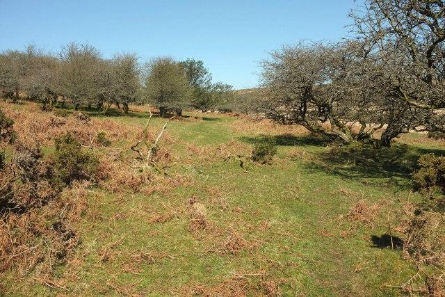 Bushes, Halshanger Common
