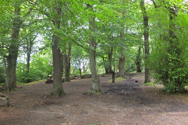 Woodland path, Corstorphine Hill