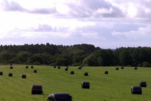 Silage fields near Evelix