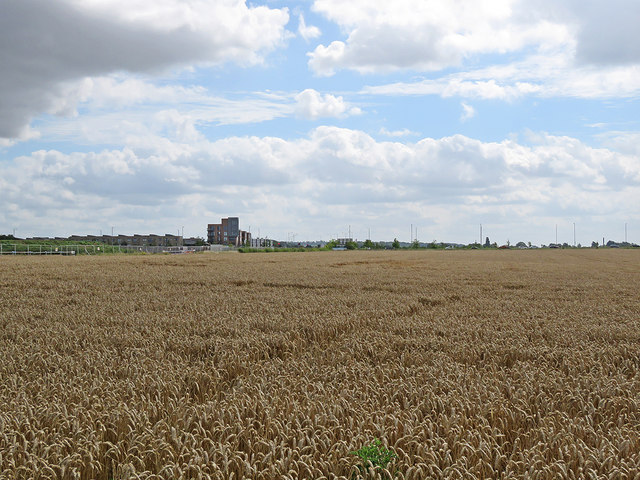 Over a wheatfield to Addenbrooke's Road