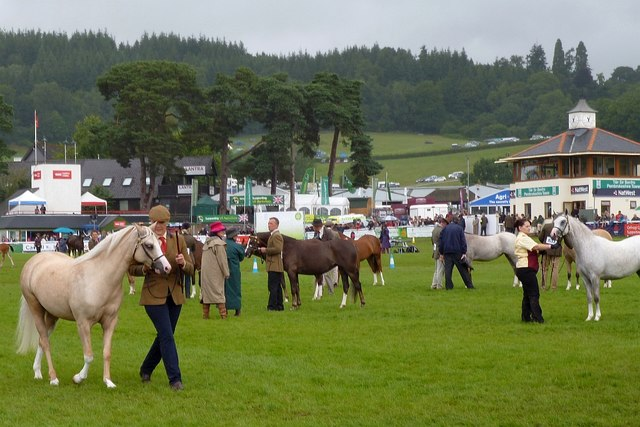 Horses being judged, Royal Welsh Show
