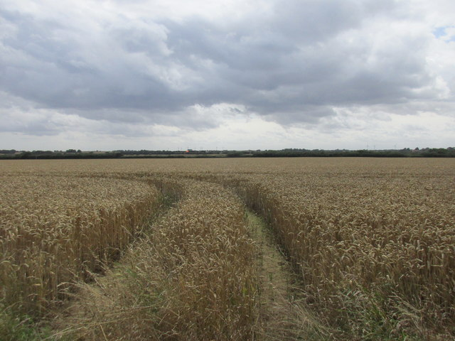 Wheat field between Fitling and Garton