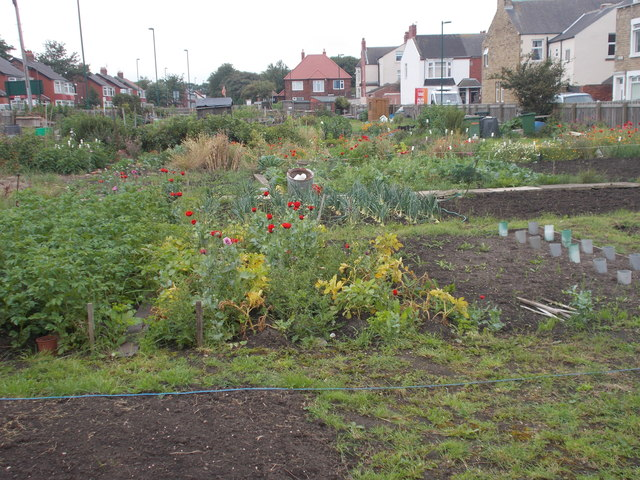 Allotments - Thrush Road
