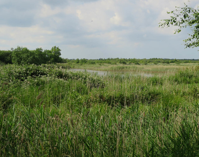 Bure Marshes