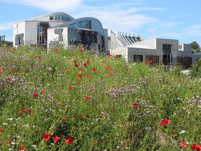 Wild flowers at the Scottish Parliament