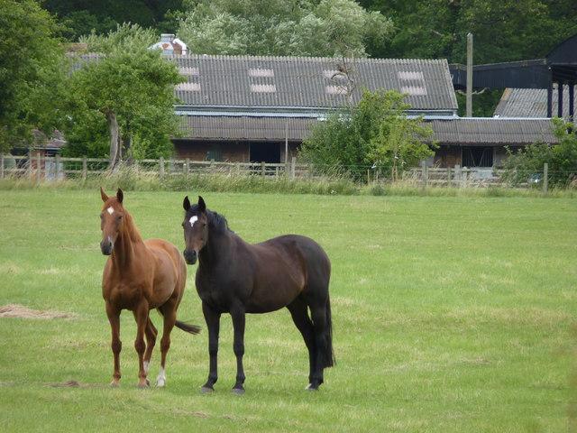 Horses on Saldons Farm, Earls Common