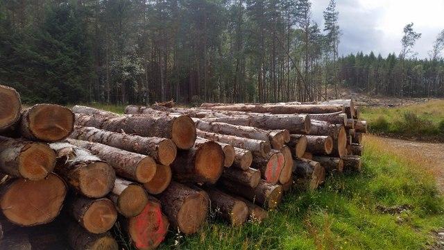 Forestry work near Struy