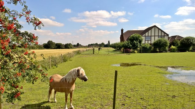 Standing guard by Marsh Road, Crowle
