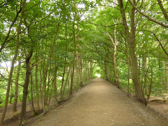 Embankment in Bramley Fall woods