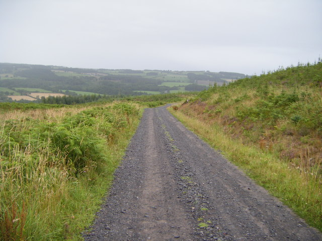 Black Bank forestry track
