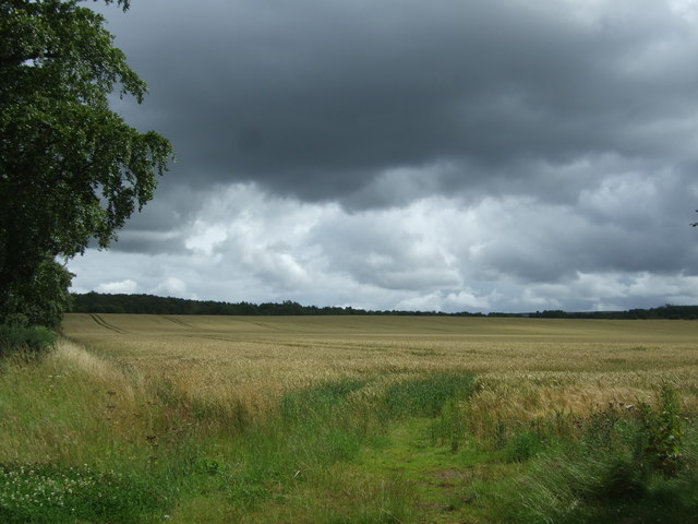 Crop field, Duncanlaw