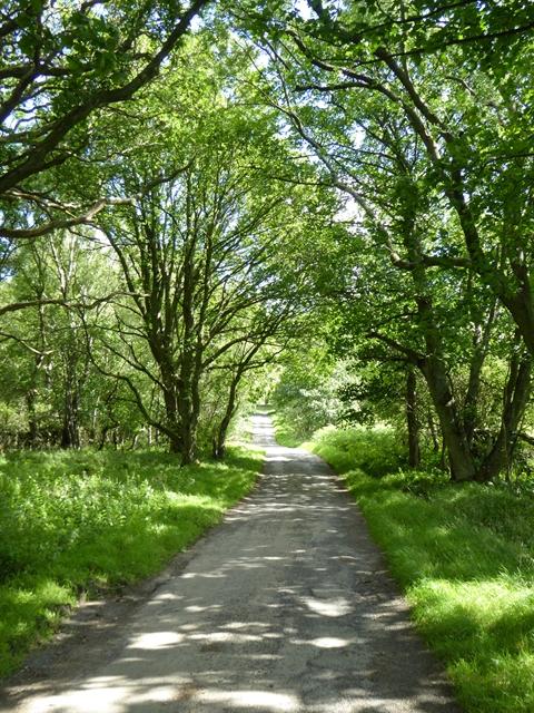 Road to Viewley Farm