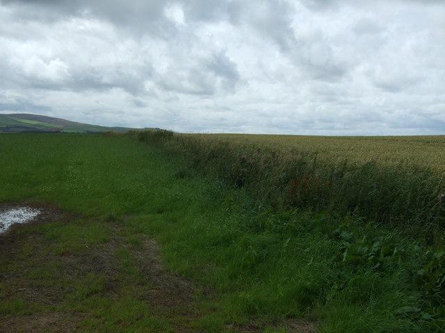 Field boundary, Danskine