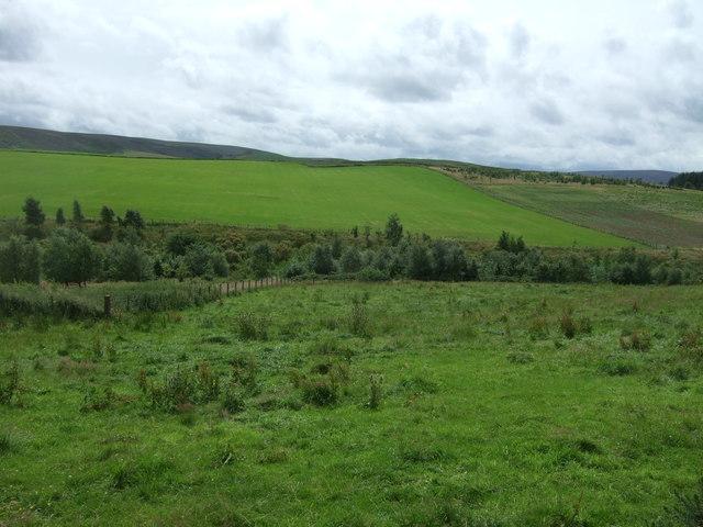 Grazing and woodland near Danskine Burn