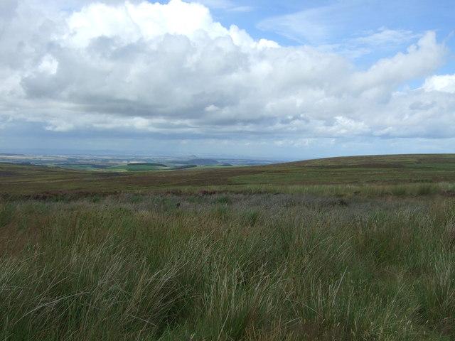 Rough grazing, Lammermuir Hills