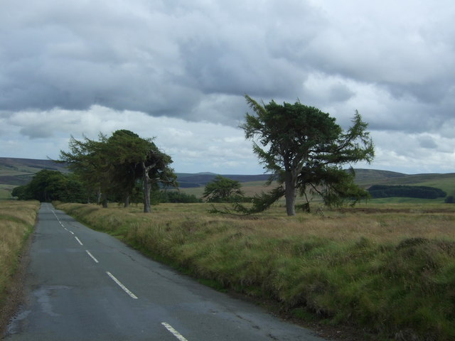 Trees beside the B6355
