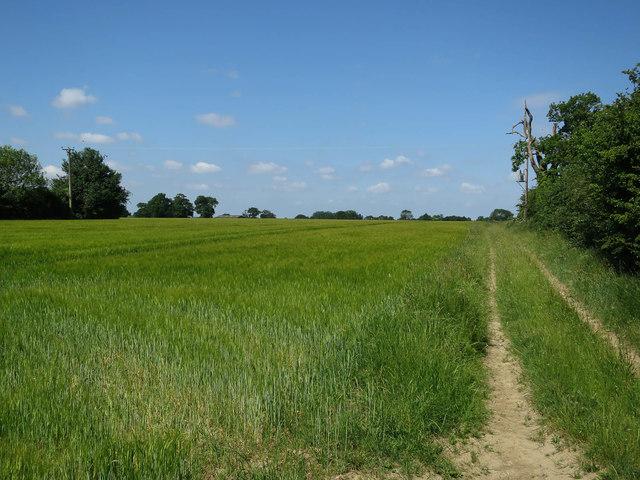 Field off Lingwood Road